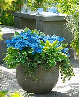 114 Best Images About Shade Container Gardens On Pinterest