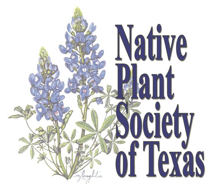 147 best images about native texas plants on pinterest