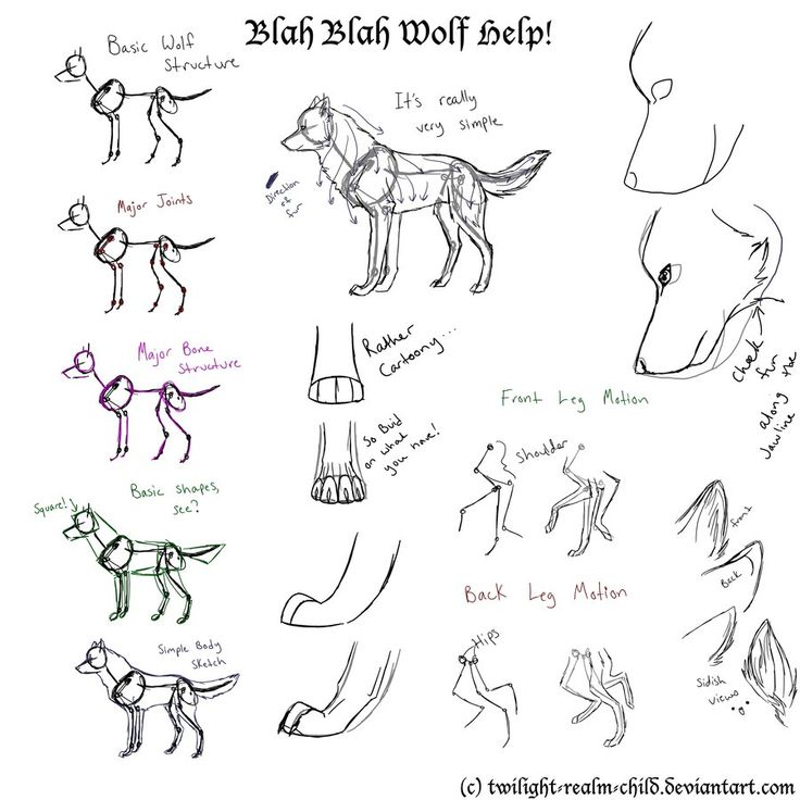 A simple guide to drawing wolves by twilight realm child