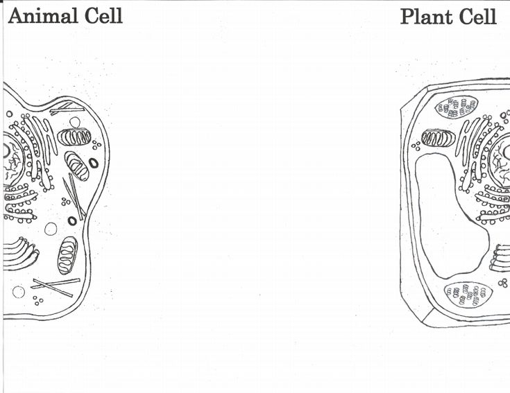 Plant Vs Animal Cell Coloring Pages