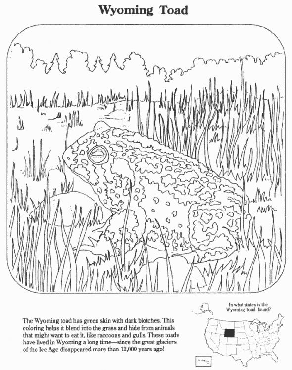 47 best images about Educational Coloring Pages on