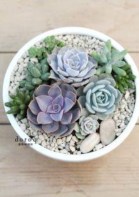 ~ Potted Succulents ~ | Cacti & Succulents | Pinterest ...