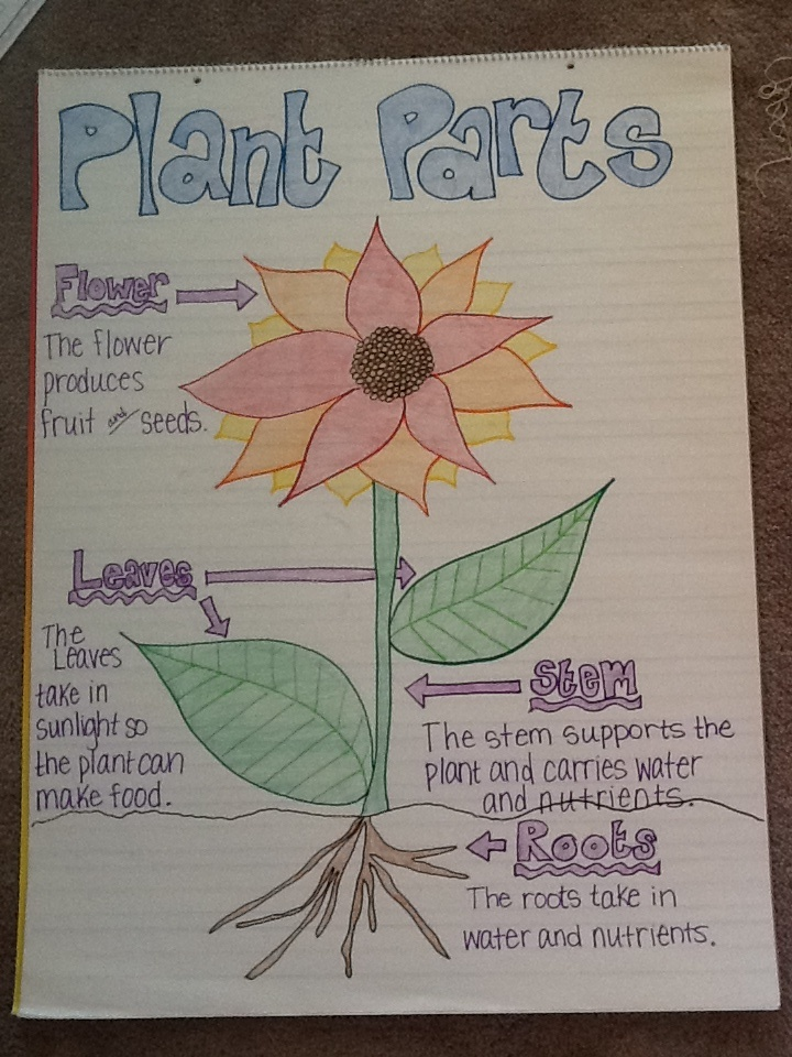 Plant Growth Chart Diagram Printout 1 Plant 15 Days Chart The Growth