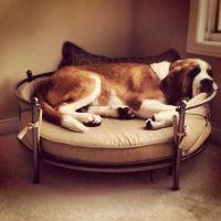 Top 25+ best St Bernards ideas on Pinterest