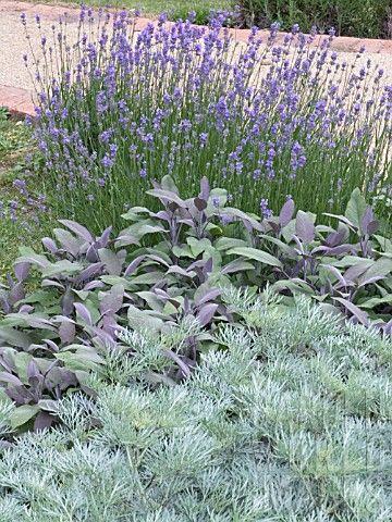 25 Best Ideas About Lavender Garden On Pinterest Lavender Care