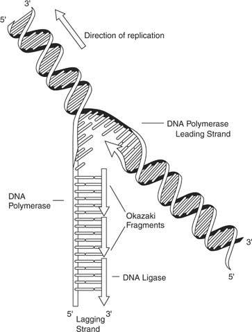 Best 25+ DNA ideas on Pinterest