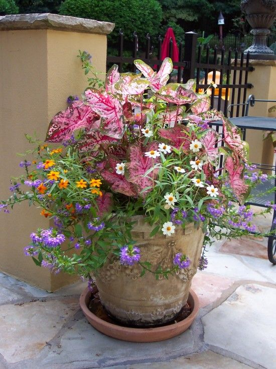 768 Best Images About Container Garden Ideas On Pinterest