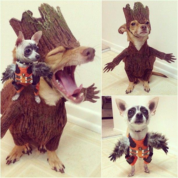 25+ best ideas about Rocket Raccoon Costume on Pinterest