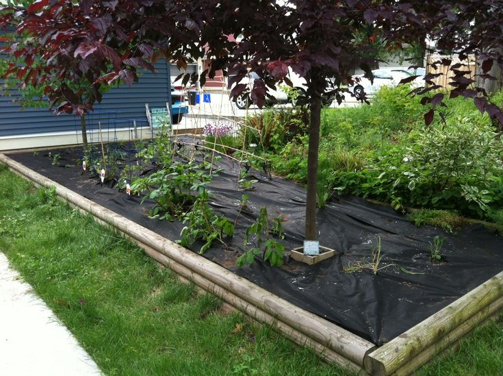 Best 20+ Backyard Vegetable Gardens ideas on Pinterest
