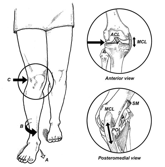 fxnal implications development of the foot and knee