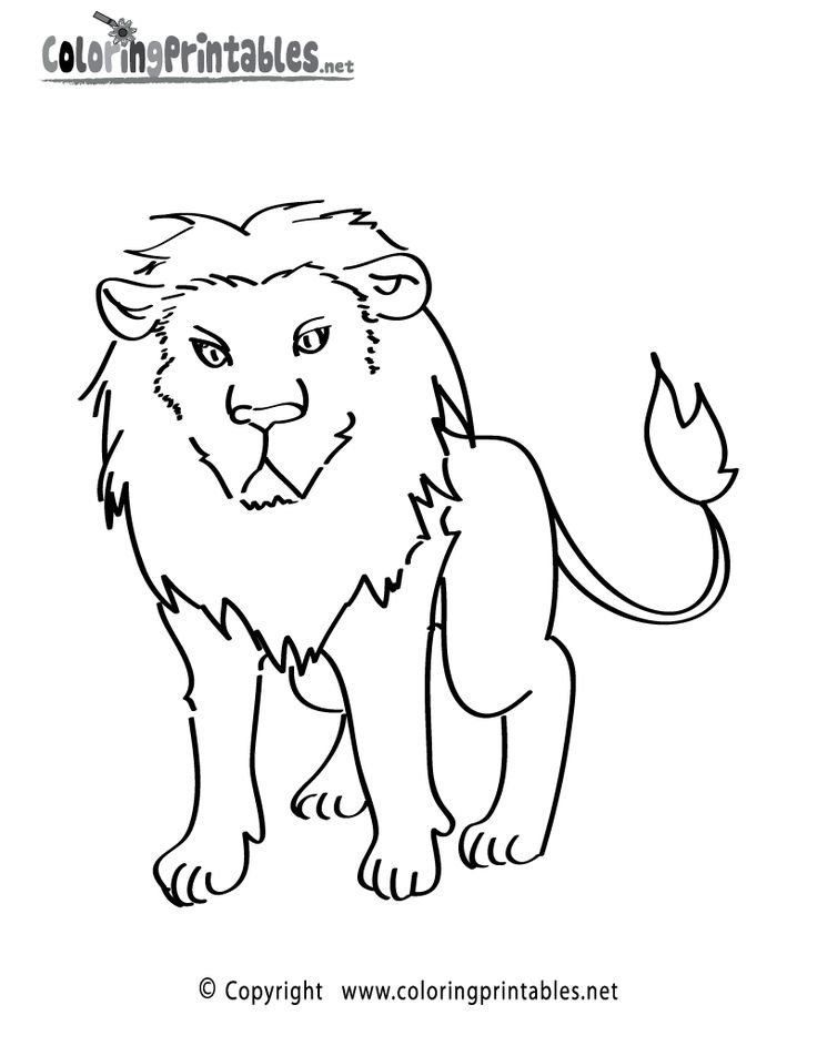 25+ best ideas about Lion coloring pages on Pinterest