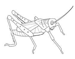Grasshopper Coloring Pages   Kidsuki