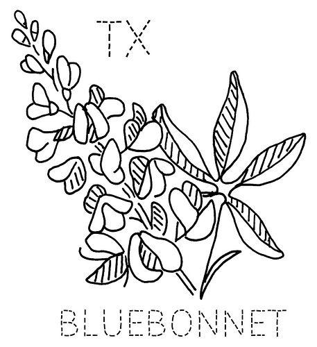 17 Best ideas about Texas Bluebonnets on Pinterest
