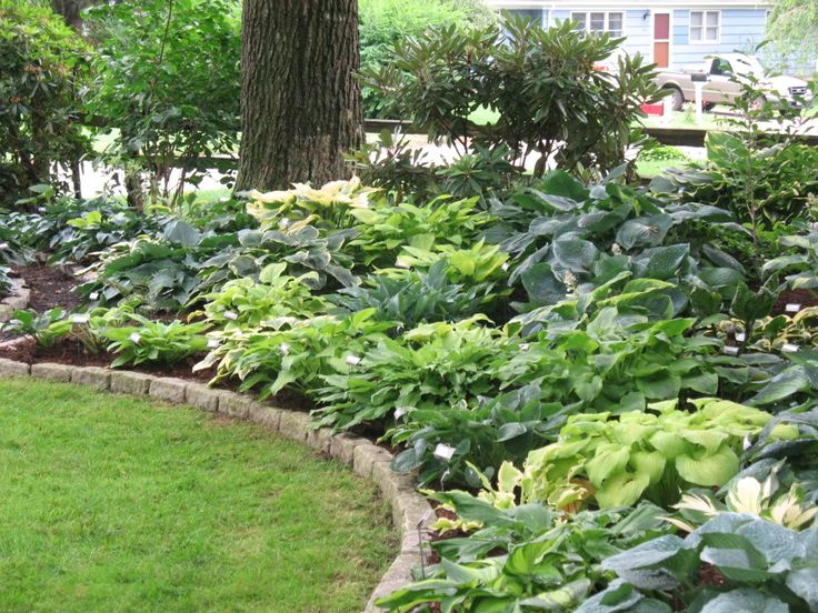 Love All The Hostas! Height Variation From Mounding The Earth