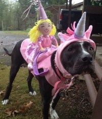 468 best images about Pitbulls on Pinterest