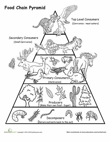 128 best images about Ecology Lessons for Middle and High