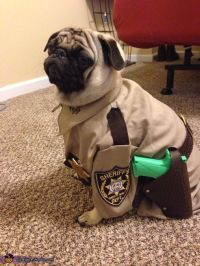 17 Best ideas about Pug Halloween Costumes on Pinterest ...