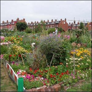 25 Best Ideas About Allotment Planner On Pinterest When To