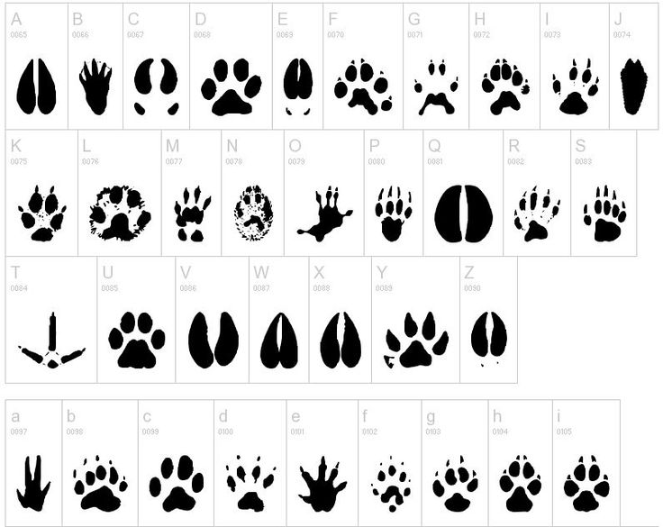 7 best images about Animal foot prints on Pinterest