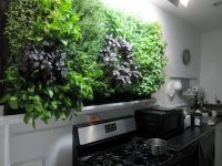 Massive kitchen wall herb garden... | Growing Herbs ...