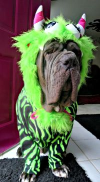 1000+ ideas about Neapolitan Mastiffs on Pinterest | Old ...