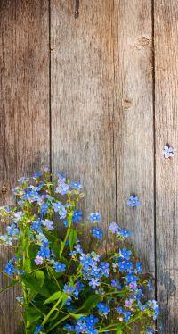 25+ best ideas about Flower Iphone Wallpaper on Pinterest ...
