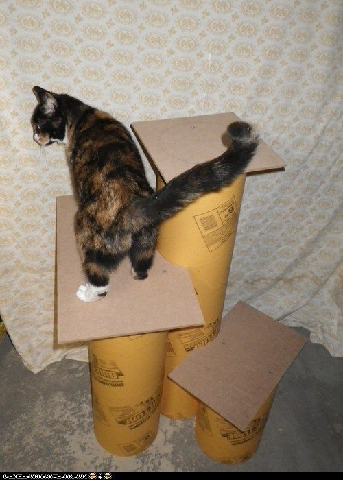 25 best ideas about Homemade cat trees on Pinterest