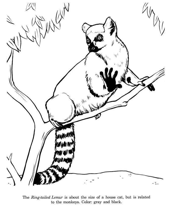 64 best images about Animal Coloring Pages on Pinterest