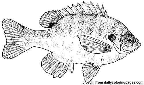 http://dailycoloringpages.com/images/texas-bluegill-fish