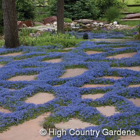Best 25 Groundcover For Shade Ideas On Pinterest Ground Cover
