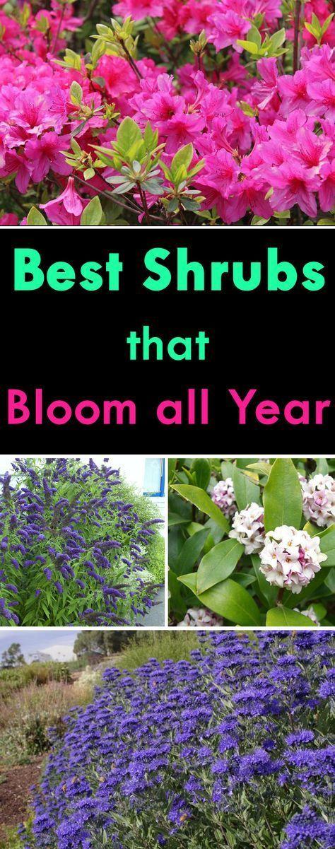 25 Best Ideas About Garden Shrubs On Pinterest Shade Shrubs