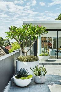 Best 10+ Outdoor potted plants ideas on Pinterest | Potted ...