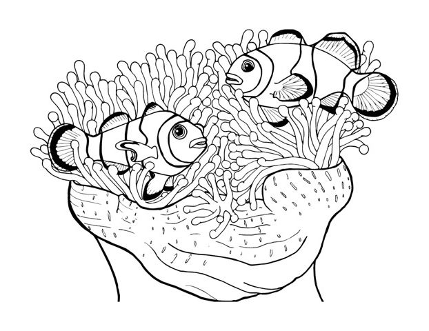 77 best images about Marine life coloring pages on