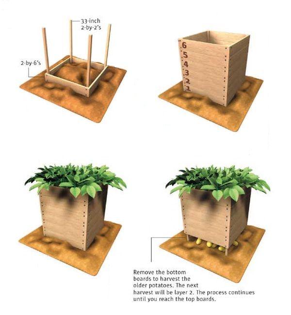 17 Best Images About Garden Box Ideas On Pinterest Gardens