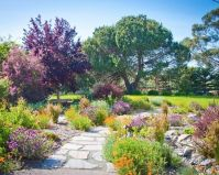 Drought tolerant landscaping, color, lavender, California ...