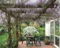 1000+ images about Garden: Wisteria Lane on Pinterest ...
