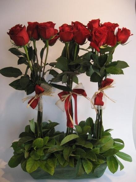 ARREGLO JACQUELINE Cdigo A015 Consta de rosas rojas amarradas en isla decoradas con verde y una base de madera y un detalle de cintas rojas