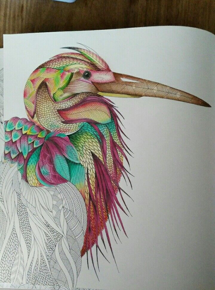 Millie Marotta Tropical World Coloring Book Love It The