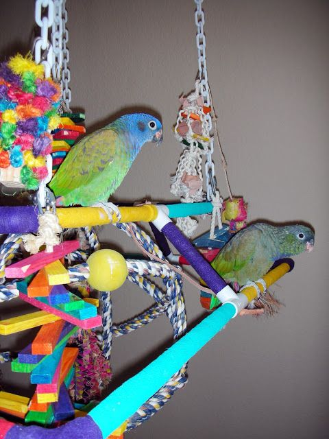 1000 Images About BirdParrot DIY Toys Play Stands And