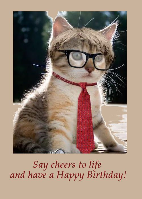 25 Best Ideas About Happy Birthday Cats On Pinterest Black Cat Drawing Black Cat Anime And