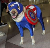 Captain America Dog Cosplay