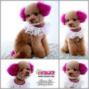 1000 ideas dog hair dye