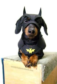 25+ Best Ideas about Bat Dog on Pinterest