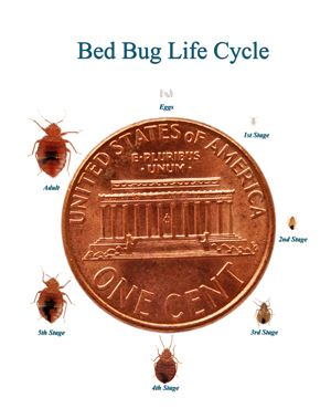 What Kills Bed Bugs Tips For Getting Rid Of Yourself Here Are