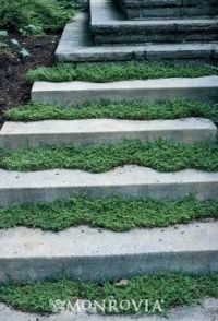 190 best images about Garden - Groundcovers and Pathways ...