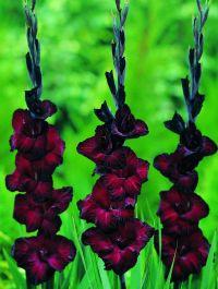 Best 20+ Gothic garden ideas on Pinterest | Black flowers ...