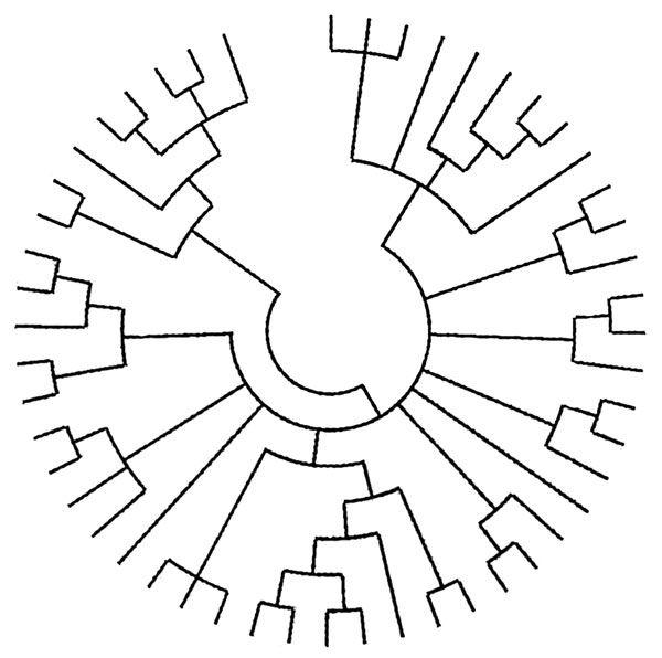 25+ Best Ideas about Phylogenetic Tree on Pinterest