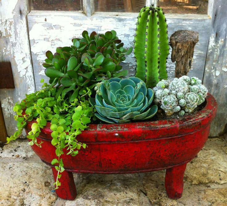 495 Best Images About Garden Ideas Succulents On Pinterest