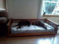 twin sized dog bed for my greyhounds. I took a upper bunk ...