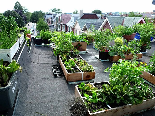 The 30 Best Images About Ideas For Rooftop Gardens On Pinterest
